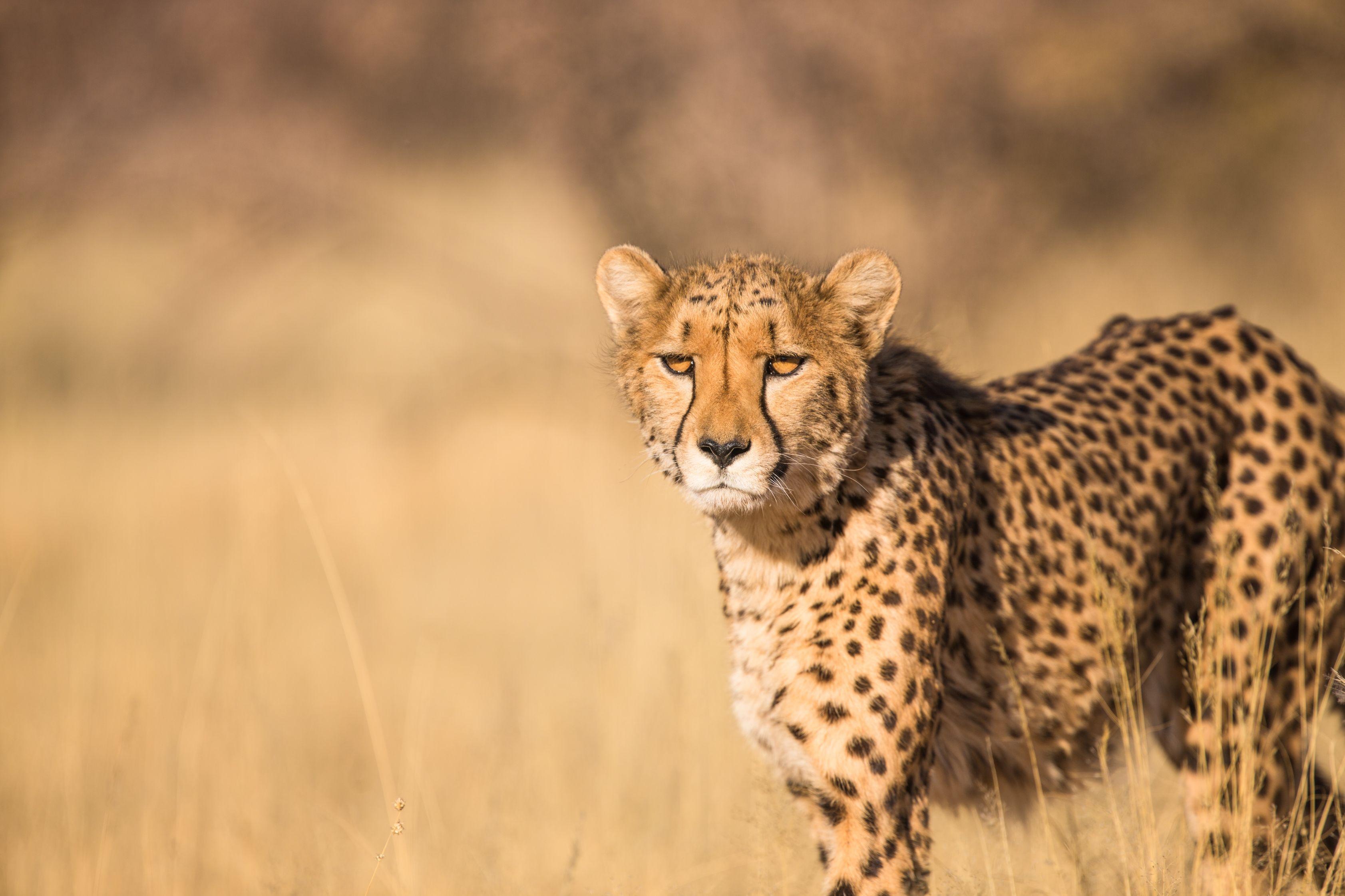 South Africa: Sublime KwaZulu-Natal (12N)