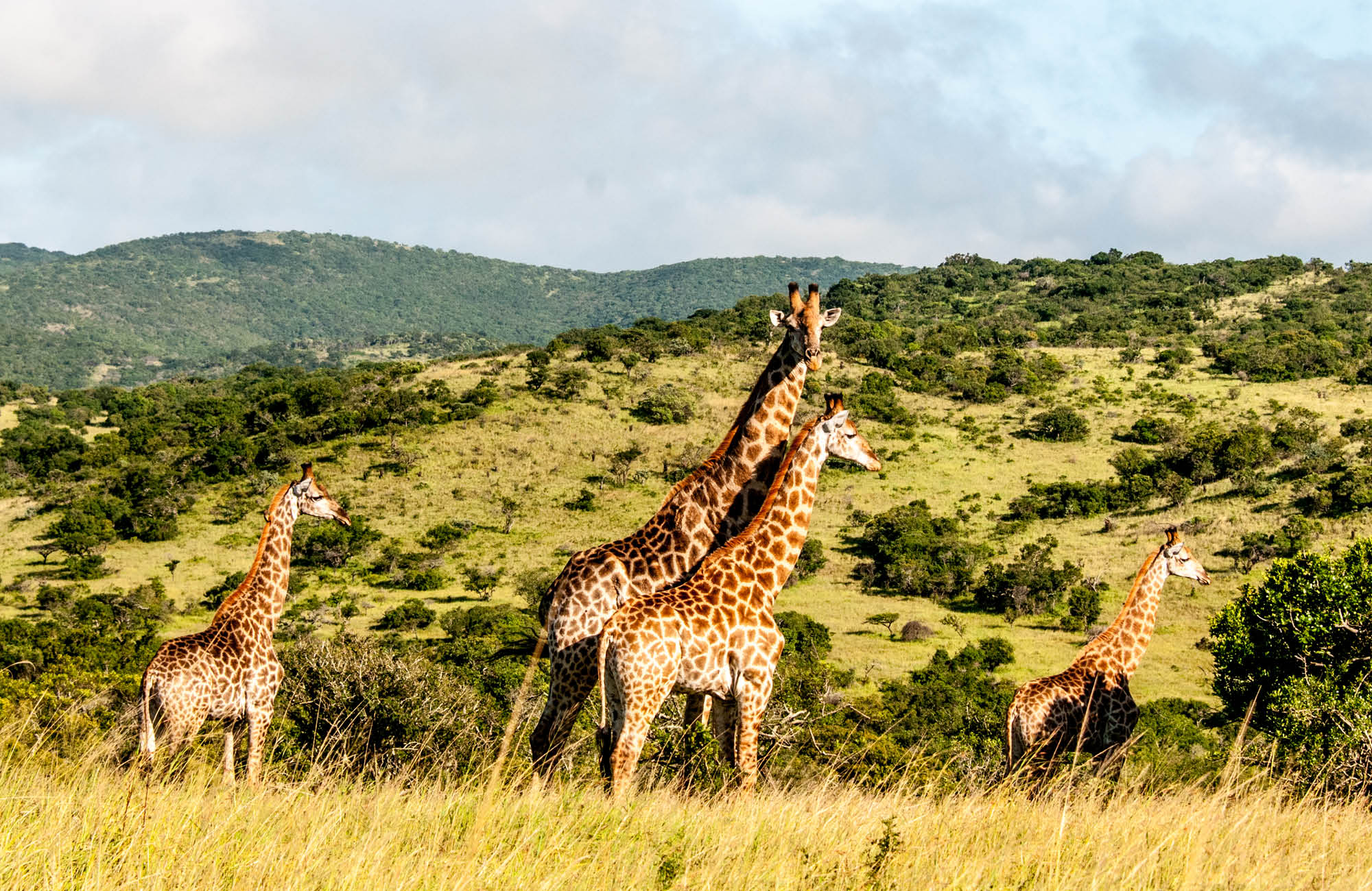 SOUTH AFRICA: COMPLETE (14 NIGHTS)